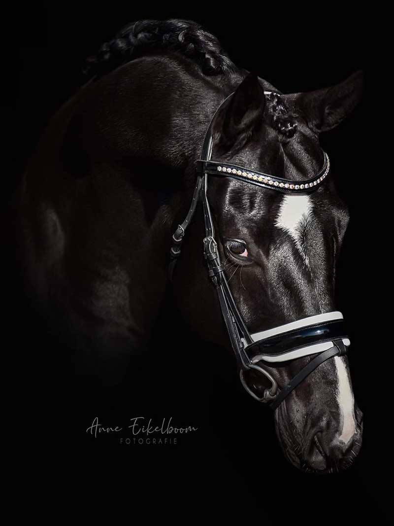 Tamara Lombardo, Sport horses for sale